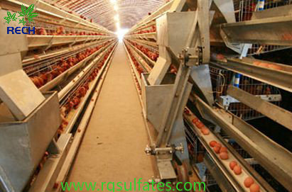 硫酸亞鐵在雞飼料中的用量和注意點